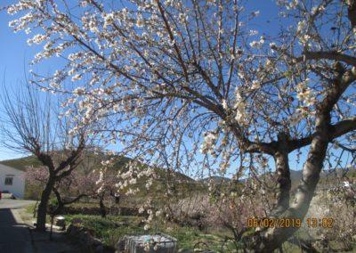 2019-02-06 Osset-Penya Parda-Osset(127)