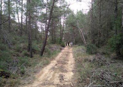 2019-03-06 Sierra de Enguera-Altos Salomon-Fuentes Navalon(113)
