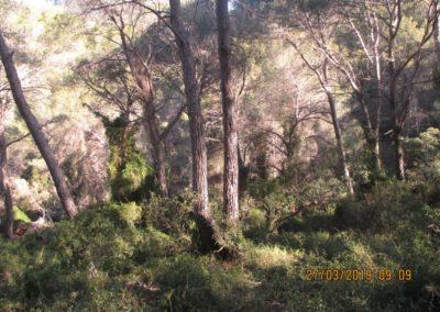 2019-03-27 Serra-Barraix-Font de LOmbria-Serra(106)
