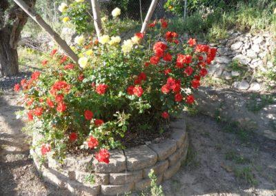 2019-05-15 Vallada-Serra Grosa-Alto de Eixa-Vallada(102)