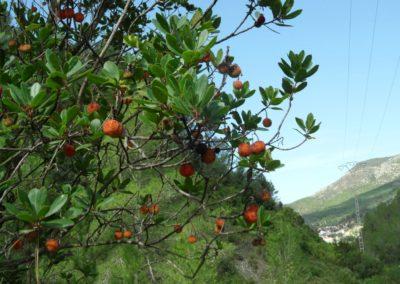 2019-09-25 Aloder-PRCV-398-El Madroñal-Los Morrones(113)