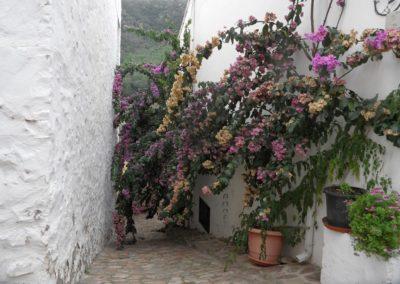 2019-11-13 Ain GR-36 Peñas Blancas-Tossal Gros-Castillo de Benali (102)