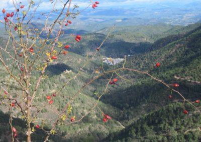 2019-11-13 Ain GR-36 Peñas Blancas-Tossal Gros-Castillo de Benali (121)