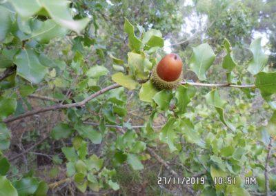 2019-11-27 Banyeres-La Blasca (112)