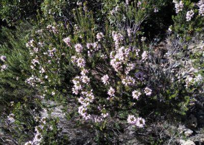2020-02-05 Chelva-Pico del Remedio (129)