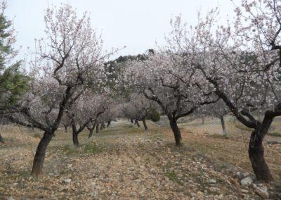 2020-02-12 La Juana-La Almeza-Arcos de la Salina (116)