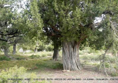 2020-02-12 La Juana-La Almeza-Arcos de la Salina (123)